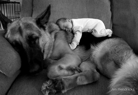 puppy sleeping with baby baby kid sleep image 355344 on favim