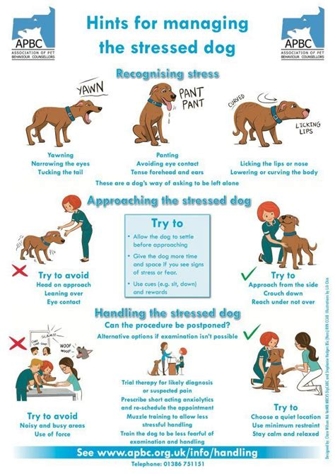 puppy basics 25 best ideas about behavior on care pet care and language