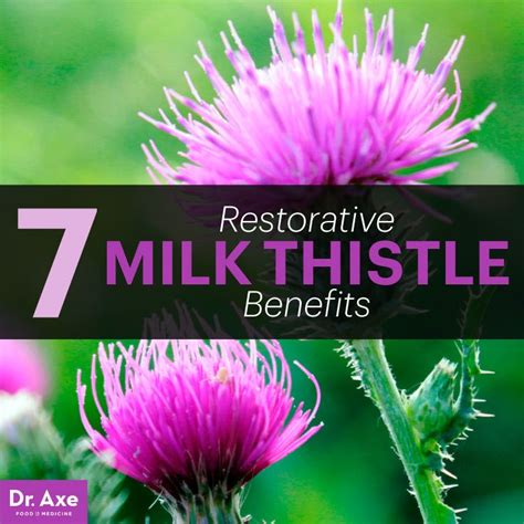 Milk Thistle Detox Benefits by 17 Best Ideas About Milk Thistle Benefits On