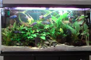 cichlids.com: Tank examples: mixed 75Gallon (http://www