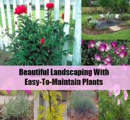 Easy To Maintain Garden Ideas Beautiful Landscaping With Easy To Maintain Plants Diycozyworld Home Improvement And