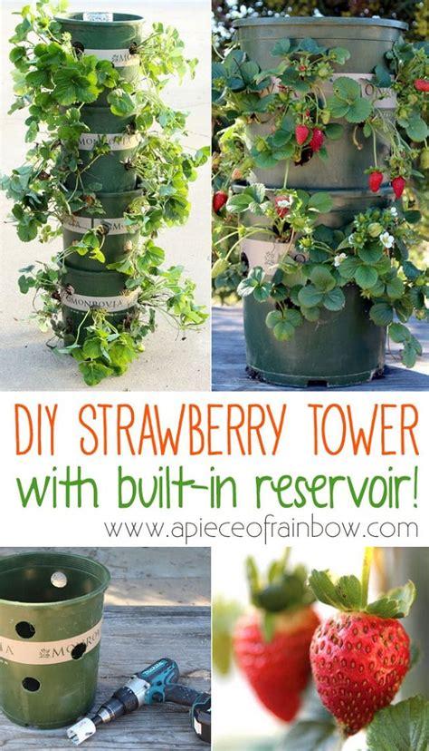 unbeatable diy ideas  growing strawberries