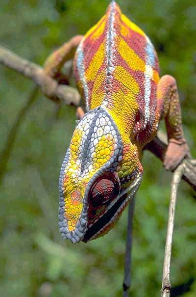 animals that change color animal color change animal color change howstuffworks