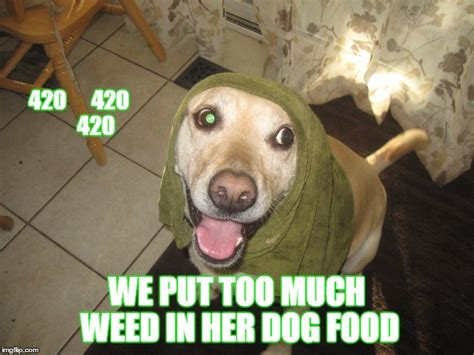 Much Dog Meme - much dog meme 28 images can we have a new witch ours