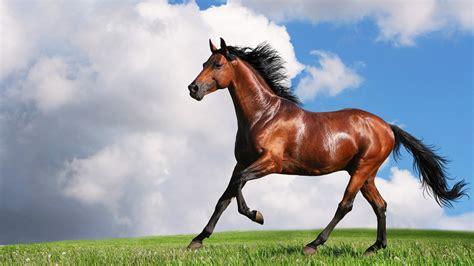 Arab Hd by Arabian Horse Hd Wallpapers P