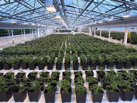 Online House Plan Design by Medical Cannabis Company To Double Its Leamington Facilites
