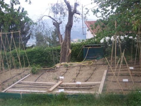 arrosage jardin potager arrosage automatique goutte 224 goutte le jardin de lulu
