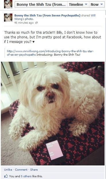 bonny the shih tzu mr will wong toronto entertainment introducing bonny the shih tzu of