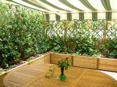 casette da terrazzo siepi per terrazzi siepi scegliere la siepe per il