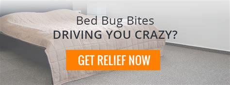 essential oils for bed bug bites essential oils for bed bug bite treatment bedbug store
