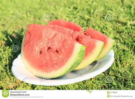 Jumping Beans Gir Watermelon Pink 2d pieces of watermelon stock photo image 44160963