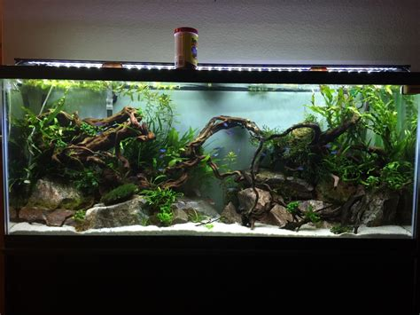 How To Set Up An Aquascape by 1000 Images About Aquarium Setups On