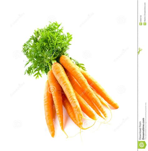 is a carrot a root vegetable carrot fresh vegetable stock photography image 8303732
