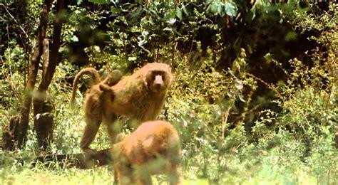 vida salvaje africa salvaje youtube
