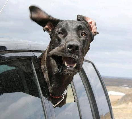 dogs in cars dogs in cars fuzzfeed