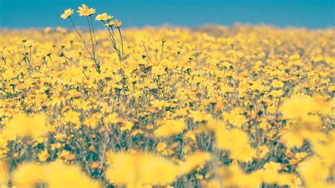 yellow aesthetic wallpaper art wallpaper   hd