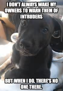Define Rug Scumbag Dog Haha Funny Dog Memes Awesome And Funny