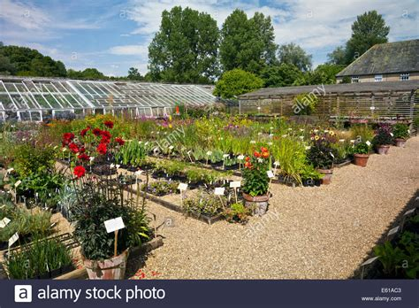 the walled garden plant nursery at forde