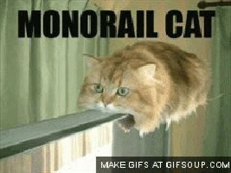 Cat Meme Gif - cat monorail gif find share on giphy