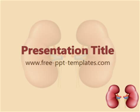 powerpoint templates kidney free kidney ppt template