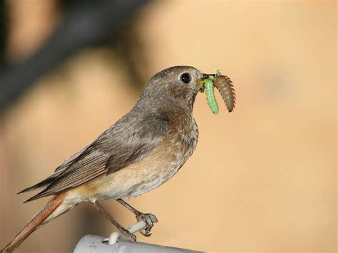 what do backyard birds eat ultimate guide to pest proofing your home debugged
