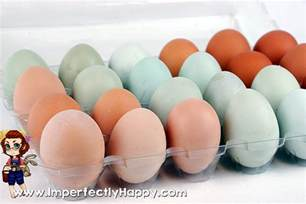 colored eggs hens that lay colored eggs
