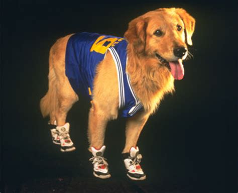 air buddy air bud disney wiki fandom powered by wikia
