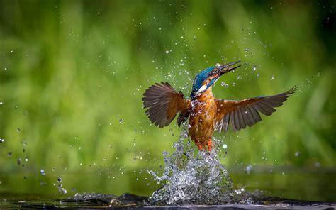wallpaper hd 1920x1080 birds mind blowing photographs of beautiful kingfisher birds 24