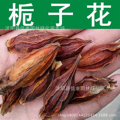 Bonsai Baum Kaufen 38 by Kaufen Gro 223 Handel Jade Bonsai Baum Aus China Jade
