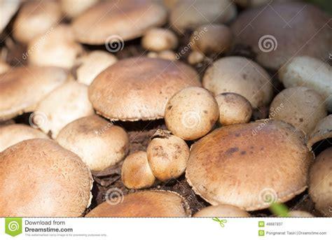 cucinare i funghi prataioli funghi dei funghi prataioli fotografia stock immagine