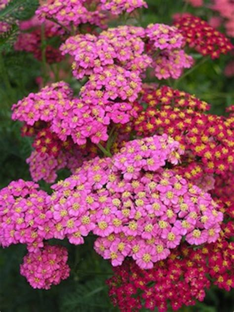 fiori per aiuole estive il giardino in piena estate bordature aiuole fiorite