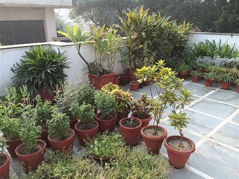 Dhara The Earth An Indian gardening blog: My roof top