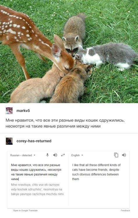 Russian Cat Meme - russian cat translations know your meme