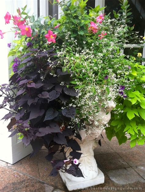 summer container garden ideas ideas for outdoor container gardens this summer boston