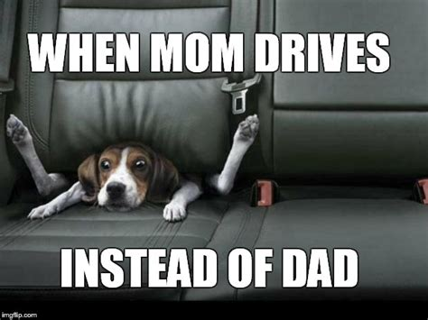 Dog Mom Meme - dog mom meme 28 images funny dog meme dog mom meme 28