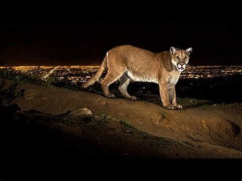 how national geographic photographer captures images of