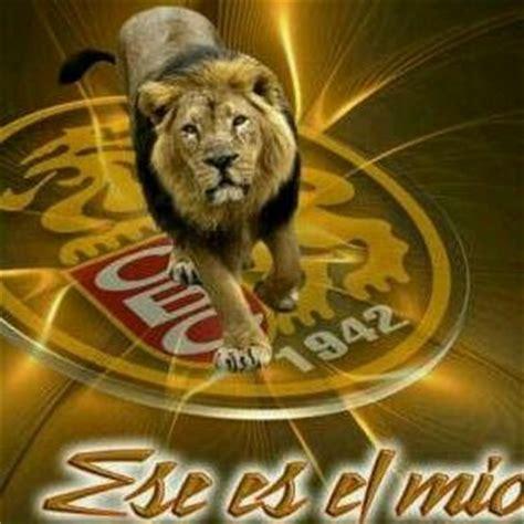 imagenes leones del ccs 74 best images about leones del caracas on pinterest
