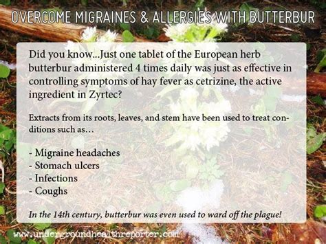 Migraines Allergies And Work by 17 Best Images About Relief For Headaches On