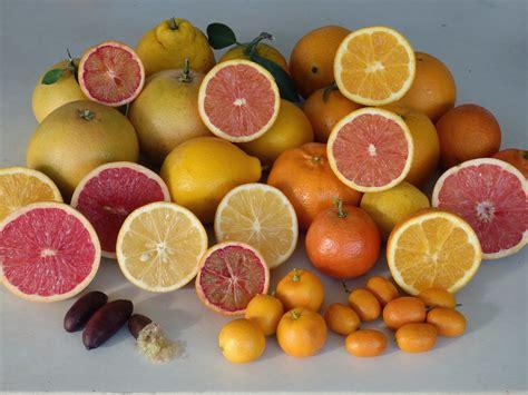 cross pollination fruit trees daleys fruit tree pollination of fruit trees