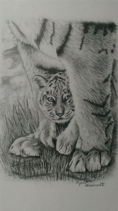 56 best drawings images on baby tiger pencil drawing www pixshark images
