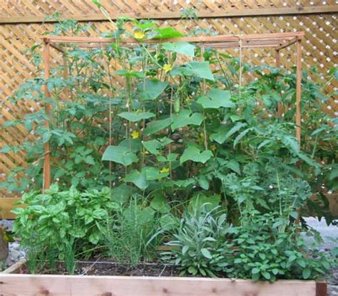 Square Foot Gardening Tomatoes by Gumbo The Dirt