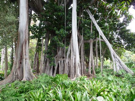 botanischer garten de la botanischer garten in de la bild foto
