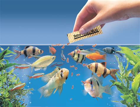What To Feed Feeder Fish feeding fish maxizoo
