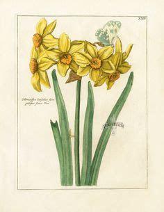 1000+ images about botanical prints on pinterest