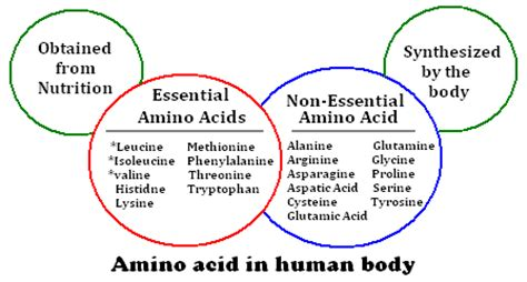 protein 8 essential amino acids amino acid supplement article series part one basic