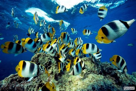 fish seaanimals aneka ikan laut oceanworld bug 252 n en g 252 zel balık resimleri sualtı balık fotoğraflarını