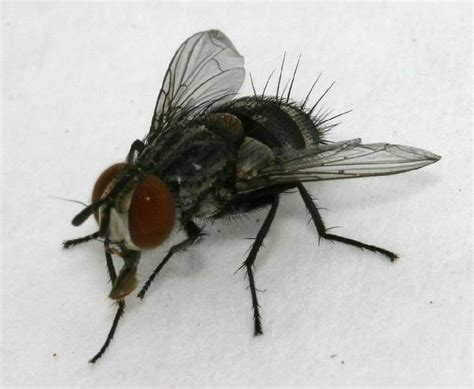 backyard flies flies in backyard 28 images good bugs for your garden