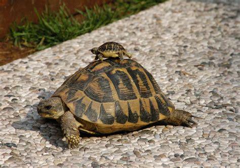 lade per tartarughe di terra tartaruga loveanimals