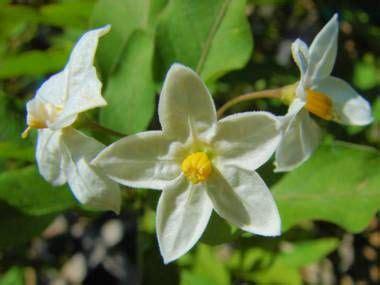 enciclopedia piante e fiori oltre 25 fantastiche idee su fiori da balcone su
