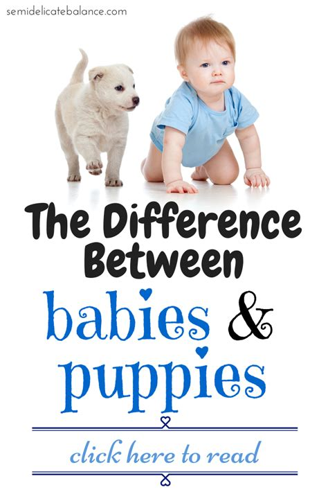 babies and puppies the difference between babies and puppies